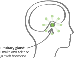 How Growth Hormone Works | Norditropin® (somatropin) Injection
